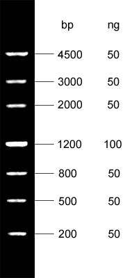DNA Marker Ⅳ