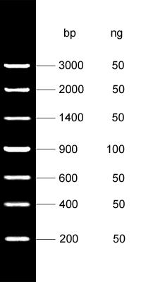 DNA Marker Ⅲ