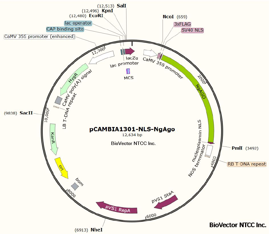 质粒DNA制备定制服务供应