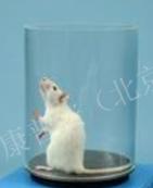 小鼠扭体动物模型 镇痛药效评价