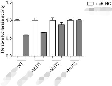 双荧光素酶报告基因实验/检测