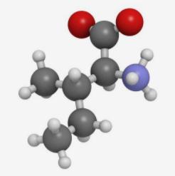 氨基酸简介
