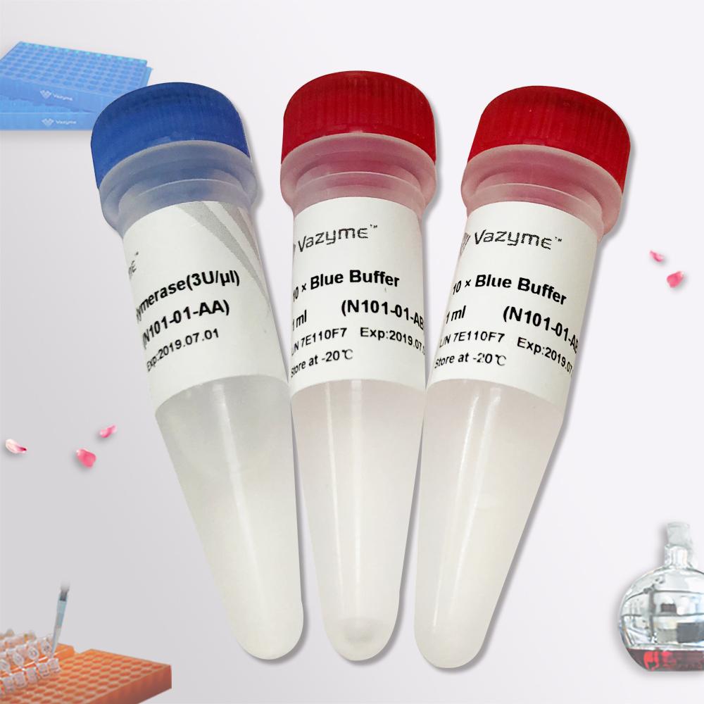T4 DNA Polymerase(用于末端平滑化的T4 DNA聚合酶)(N101)