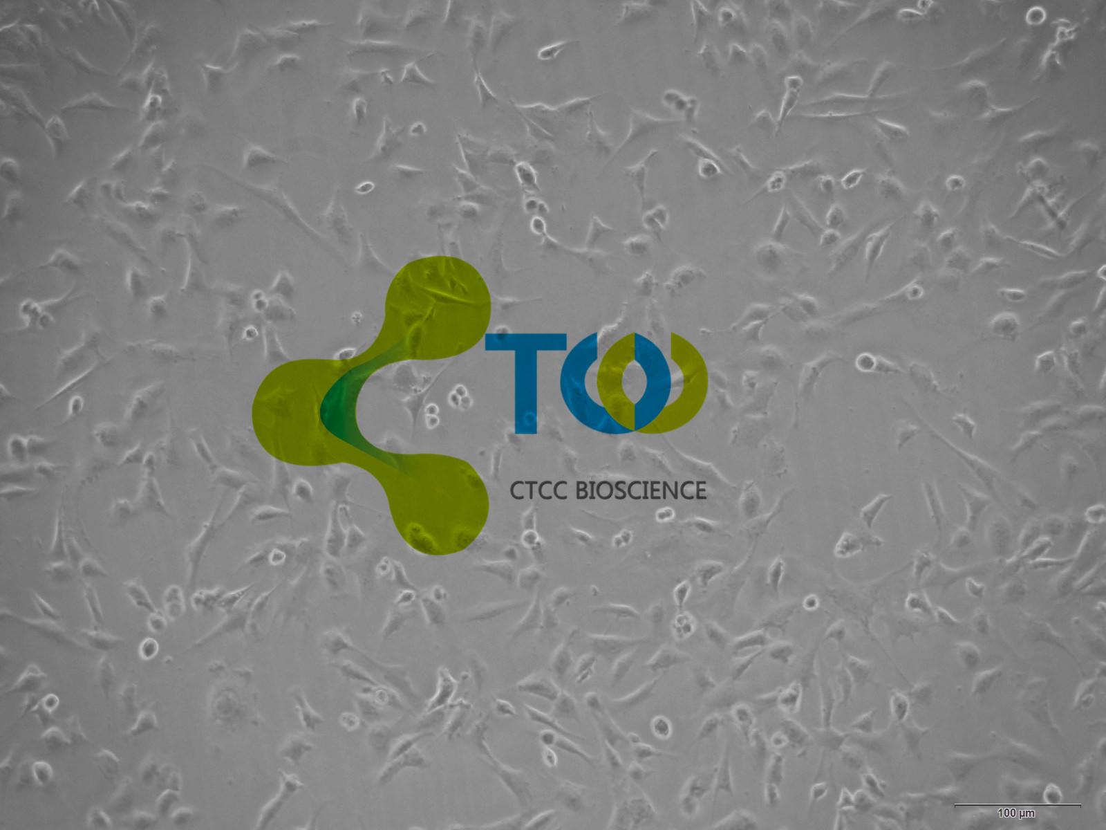 表皮胶质形成细胞