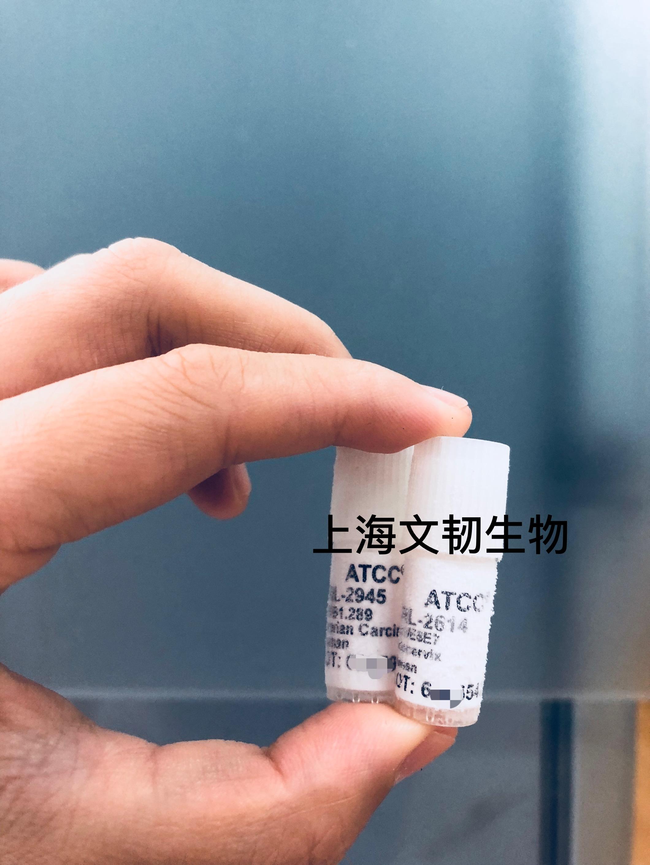 ATCC细胞/原代细胞