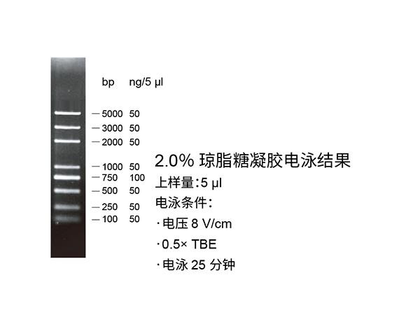 普迈MonTrack™ DNA分子量标准