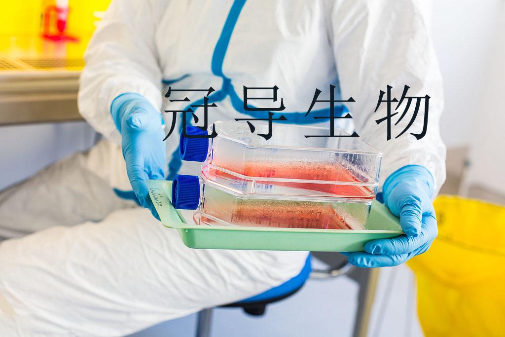 HPAEC Cell:人肺动脉内皮贴壁细胞