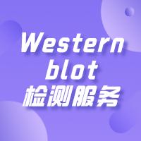 Western blot检测服务