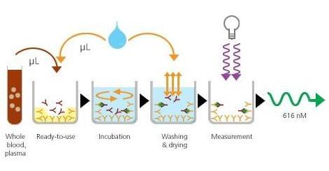 高效RIPA裂解液(组织/细胞)