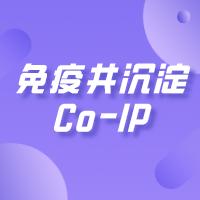 免疫共沉淀|Co-IP