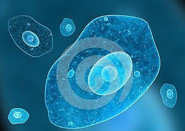 小鼠神经干细胞NE-4C(干细胞库保藏)价格