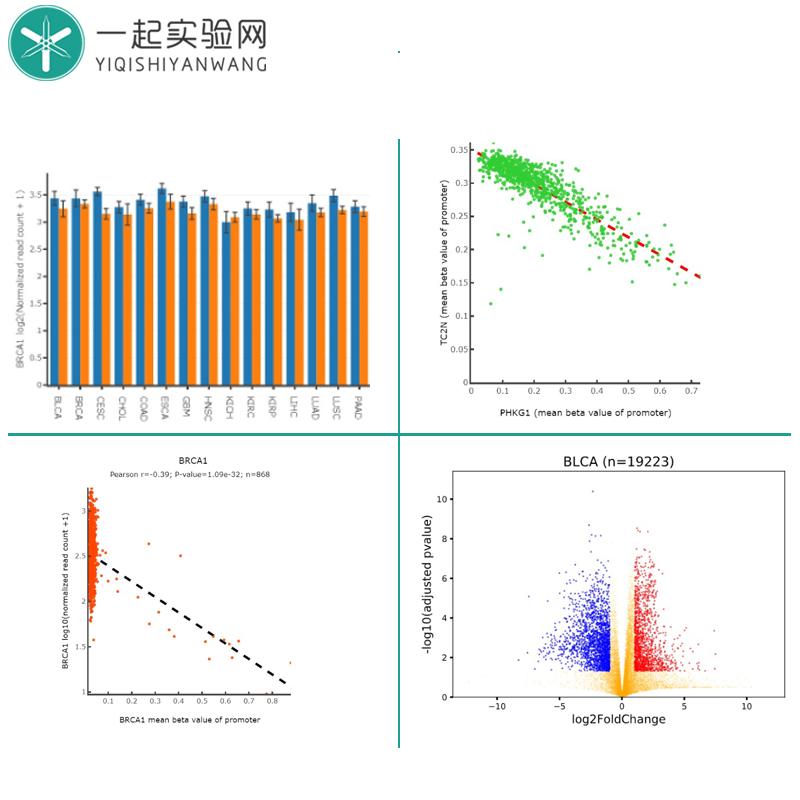 生信分析服务 全转录组测序(mRNA+miRNA+lncRNA) 数据库挖掘