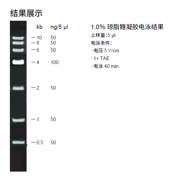 6kb Plus DNA分子量标准