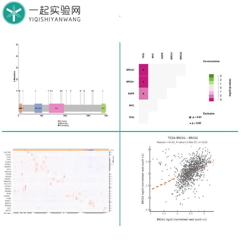 動植物簡化基因組服務 高通量測序服務