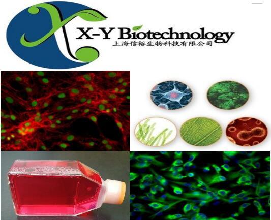 小鼠胎盘滋养层细胞