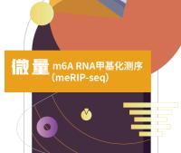 m6A全转录组测序(不仅限于mRNA)