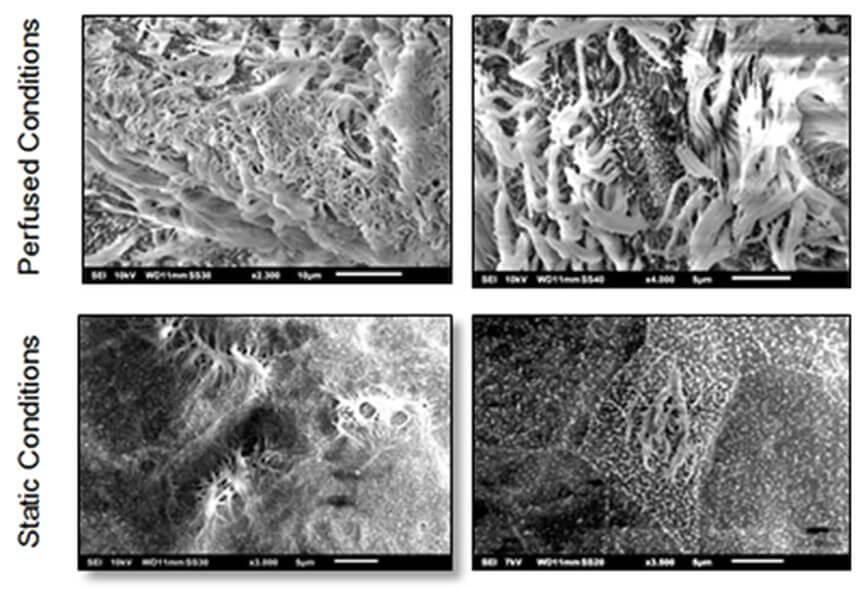 Quasi Vivo流动培养提高人支气管上皮细胞分化 Quasi Vivo中国总代理北京泽平