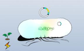 TOP10化转克隆感受态细胞