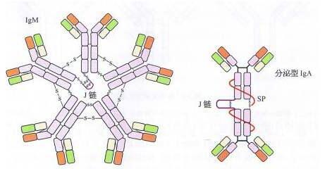Anti-ALDH3B1 Polyclonal Antibody价格