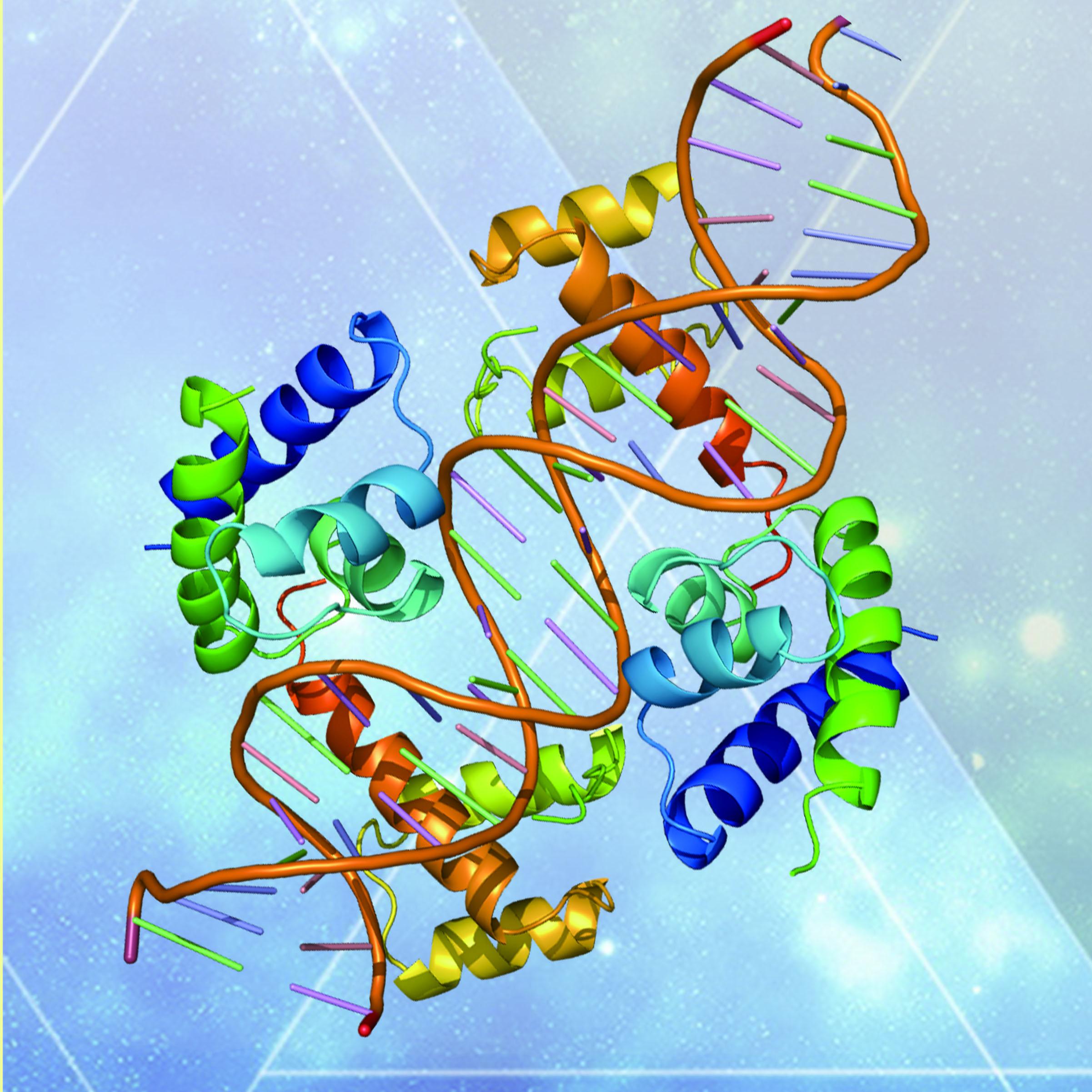ChIP测序   核酸-蛋白互作研究
