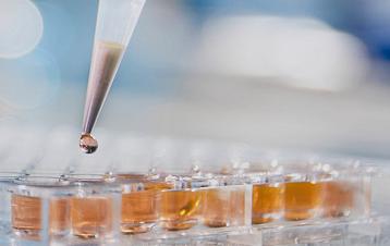 kinase profiling筛选