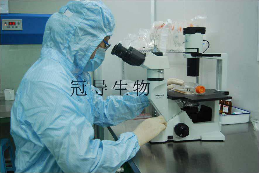 HCT 8 人结直肠腺癌贴壁细胞
