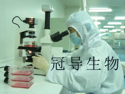 BC-028 人乳腺癌贴壁细胞