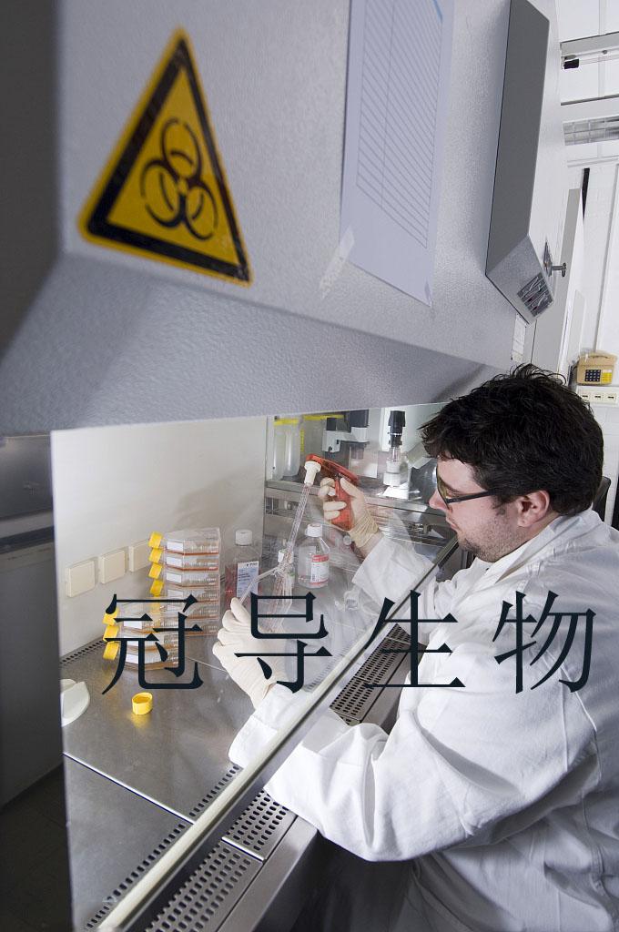 OVCA433 人卵巢癌贴壁细胞