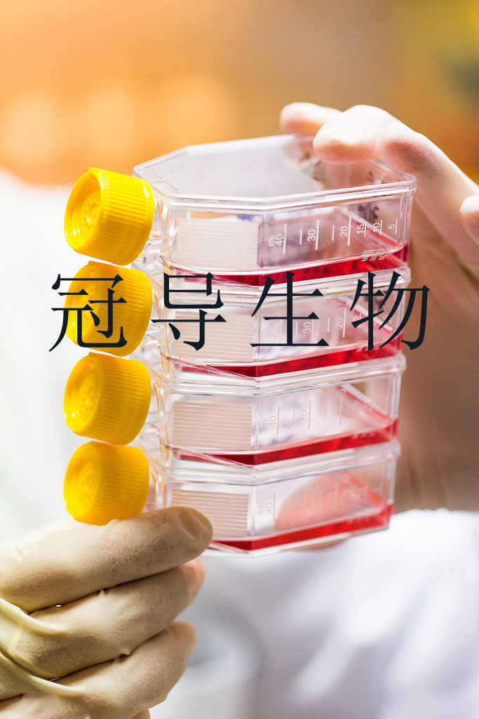 KYSE-410 人食管鳞癌贴壁细胞