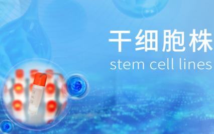 人脐带间充质干细胞(P4代)