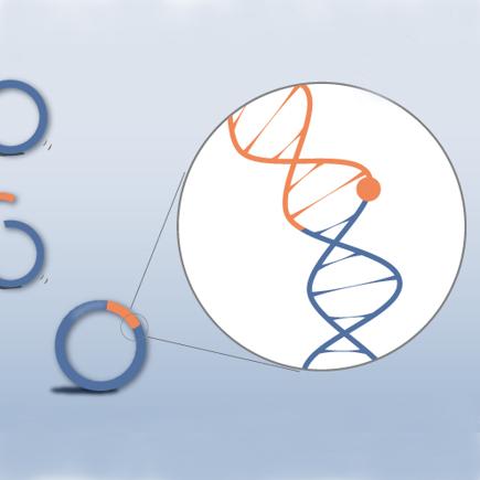 EZmax for One-Step Cloning kit (MultiS) 多片段无缝克隆试剂盒