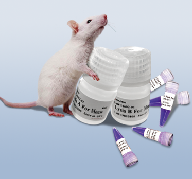 One Step Mouse Genotyping kit 直扩试剂盒