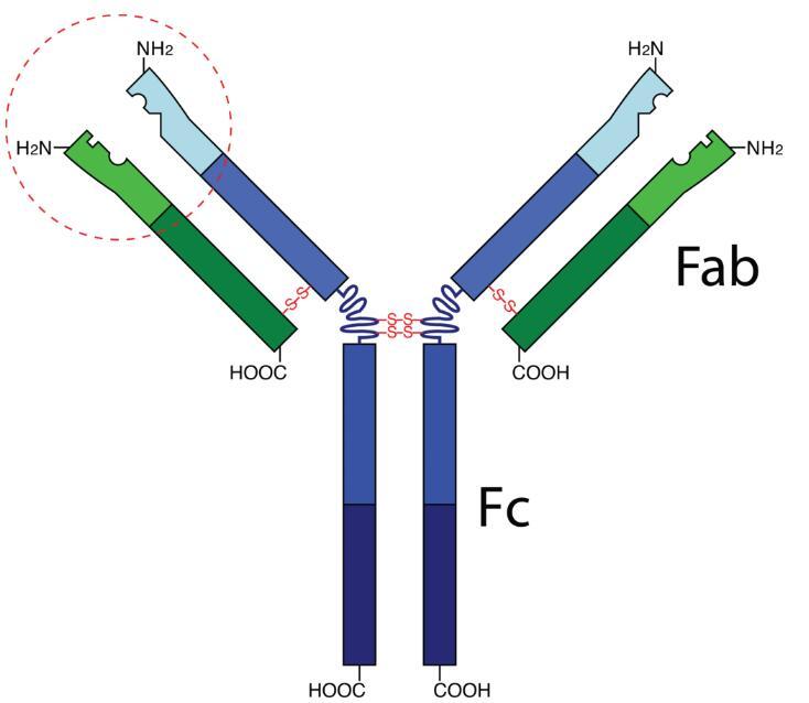 Anti-HSD3B2 Polyclonal Antibody