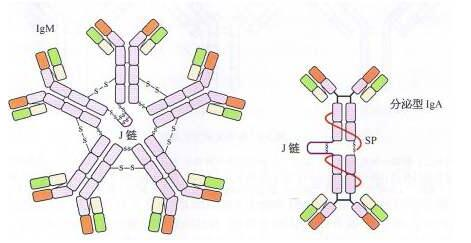 Anti-SENP1 Polyclonal Antibody价格