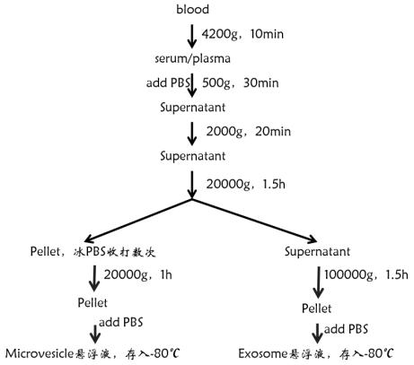 外泌体蛋白质组学