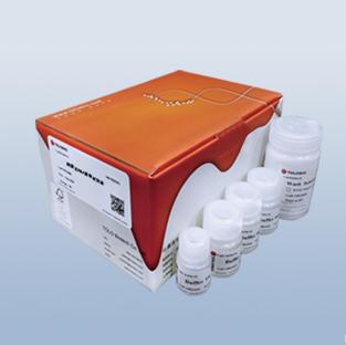 质粒DNA小量抽提试剂盒