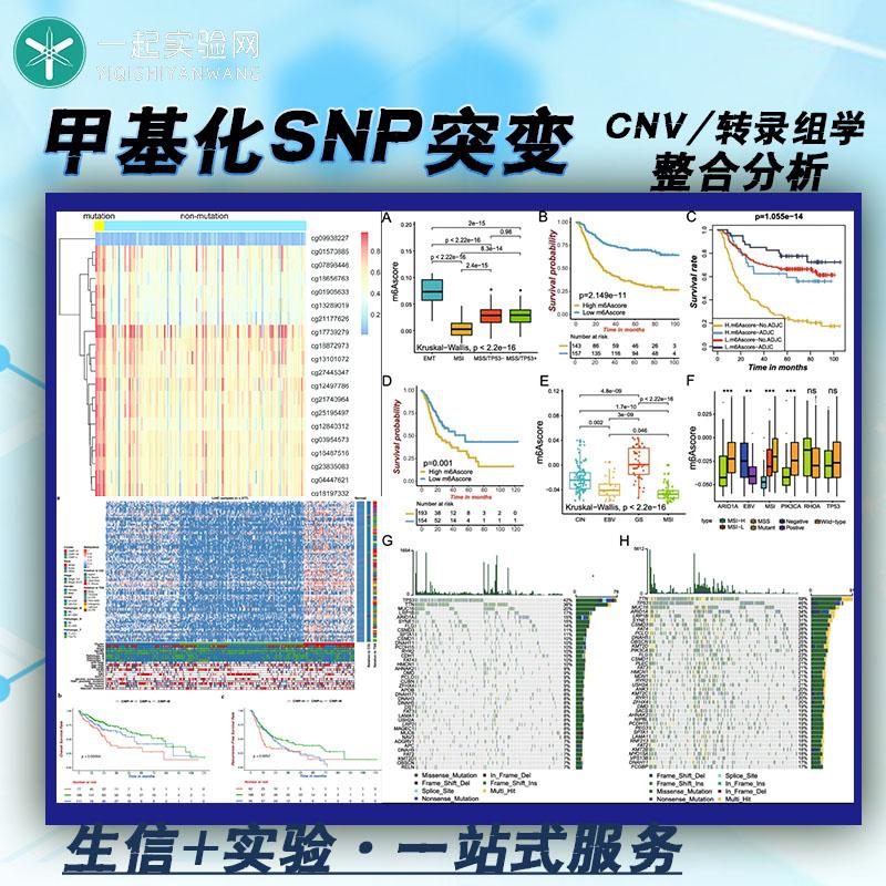 生信分析/生物信息学挖掘/甲基化SNP突变CNV与转录组学的整合分析