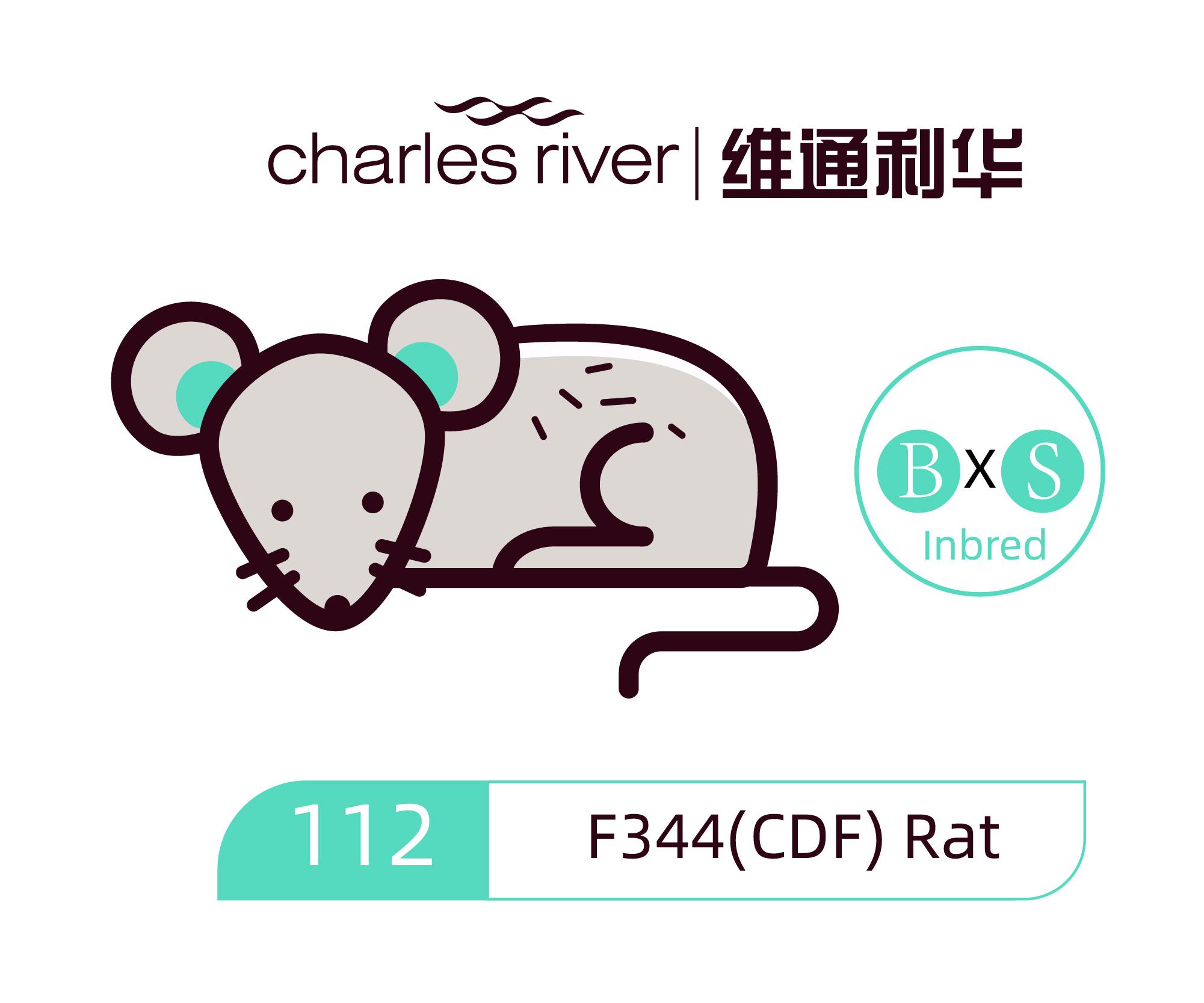 维通利华 F344(CDF)大鼠 SPF级