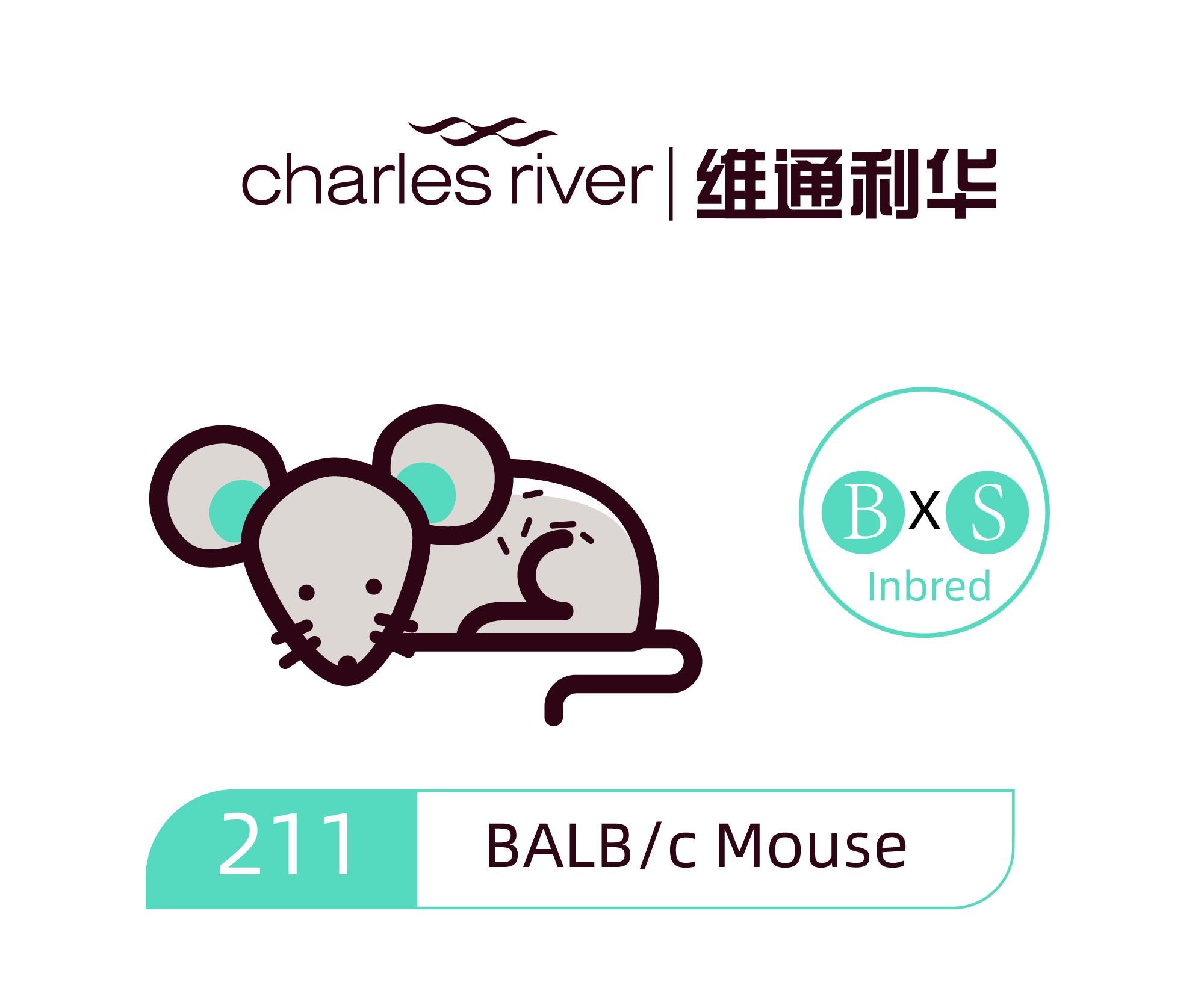 维通利华 BALB/c小鼠 SPF级 balbc