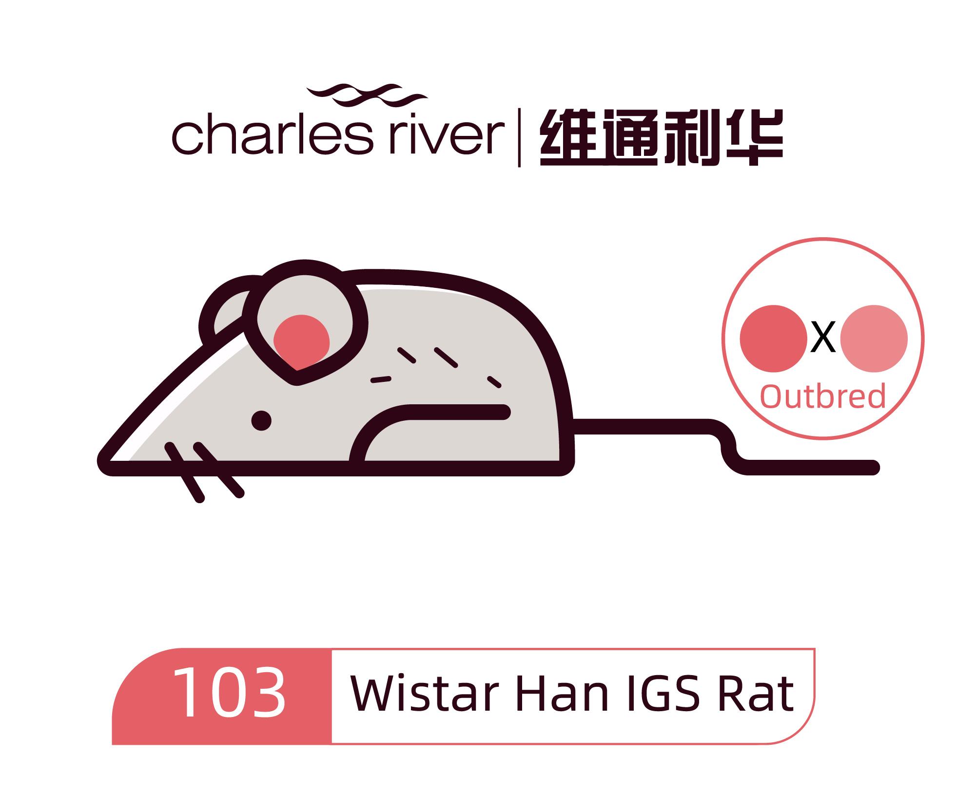 维通利华 Wistar Han大鼠 IGS SPF级