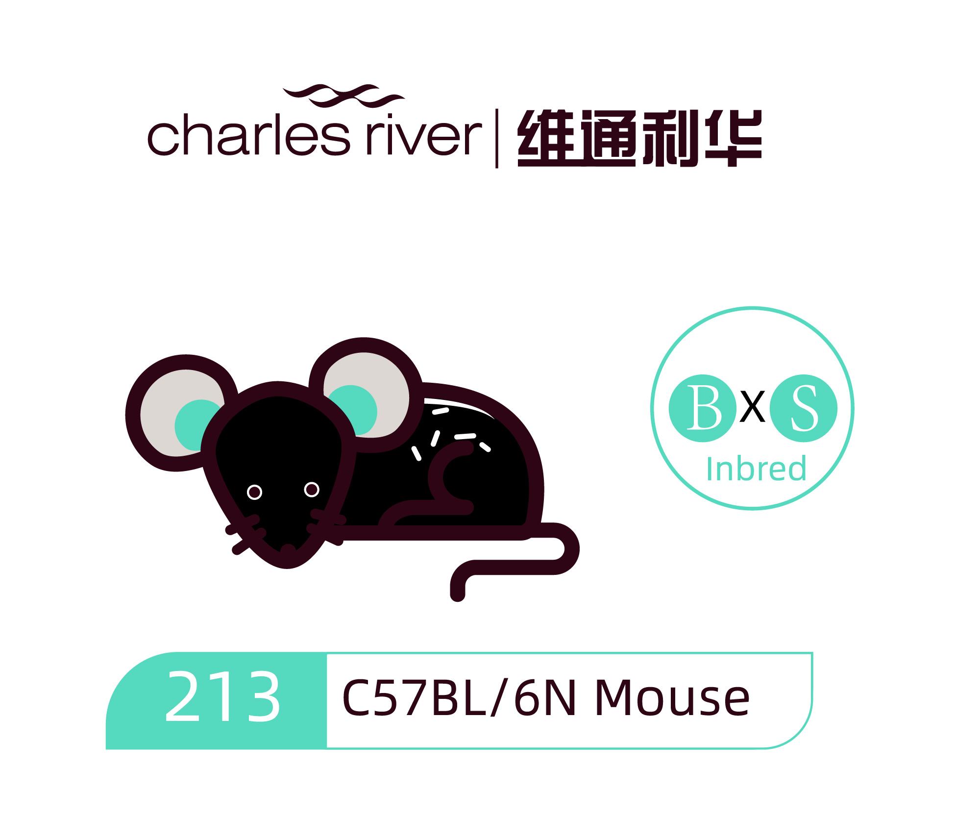 维通利华 C57BL/6N小鼠 SPF级