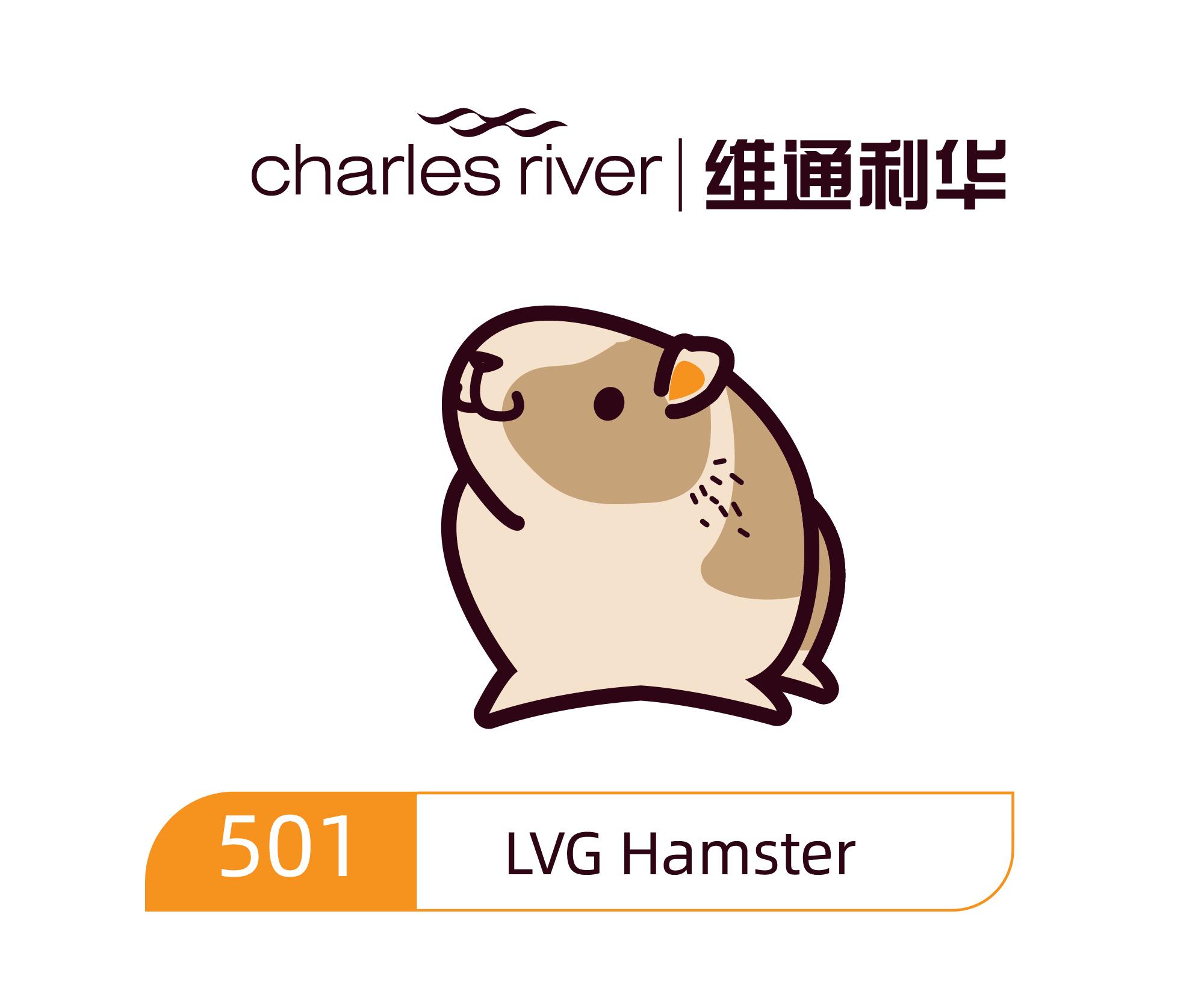 维通利华 LVG Hamster 叙利亚金黄地鼠 SPF级