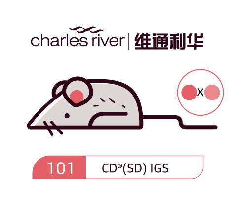 维通利华 CD(SD)大鼠 IGS SPF级