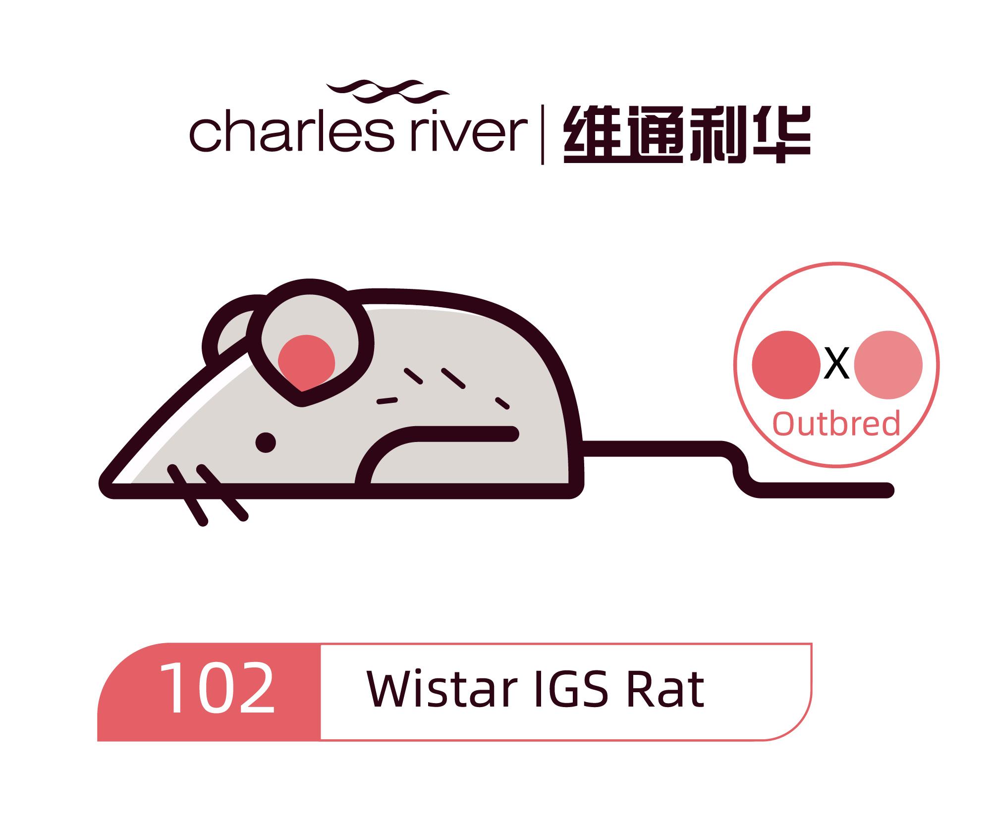 维通利华 Wistar大鼠 IGS SPF级