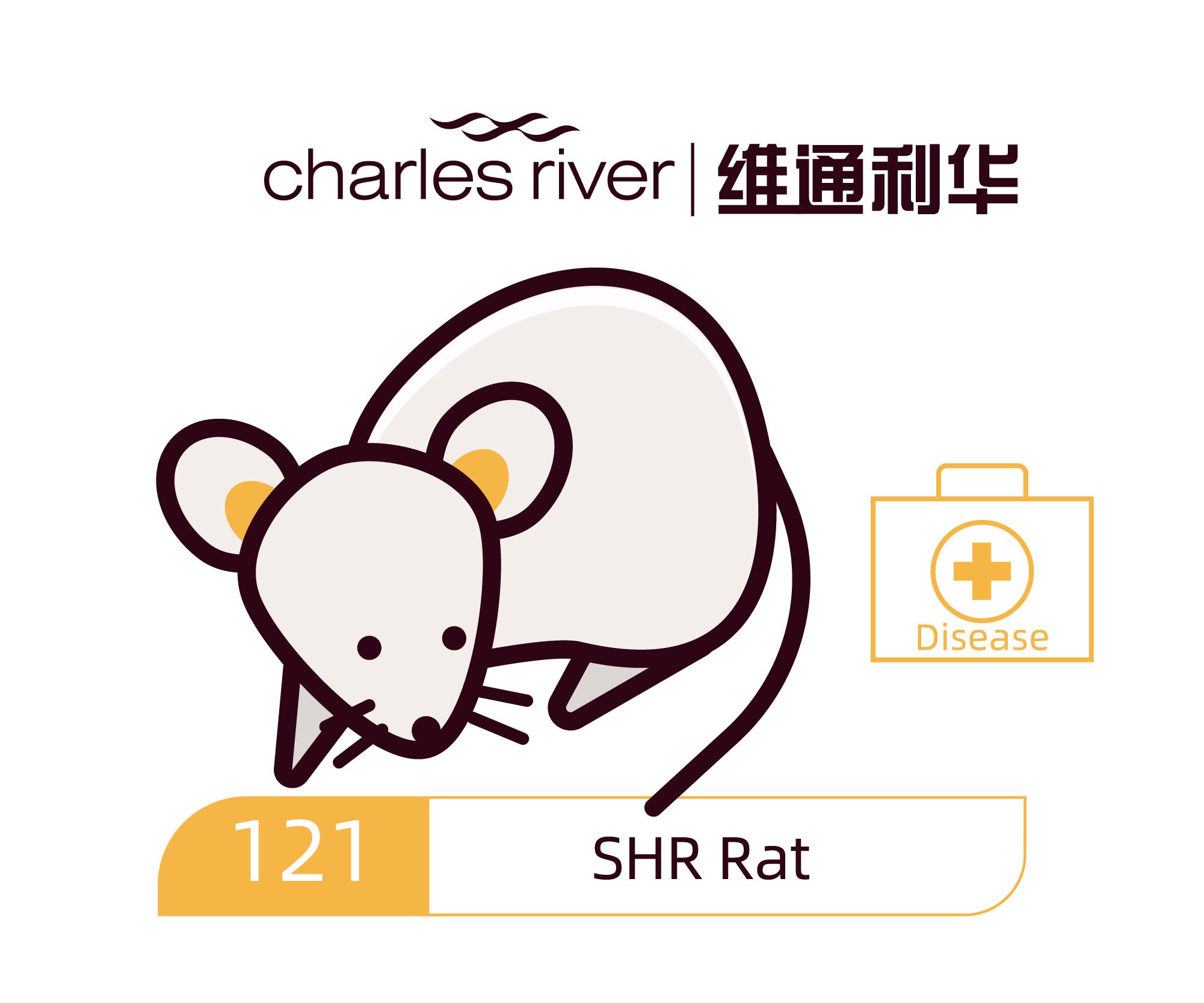 维通利华 SHR 高血压大鼠模型 SPF级