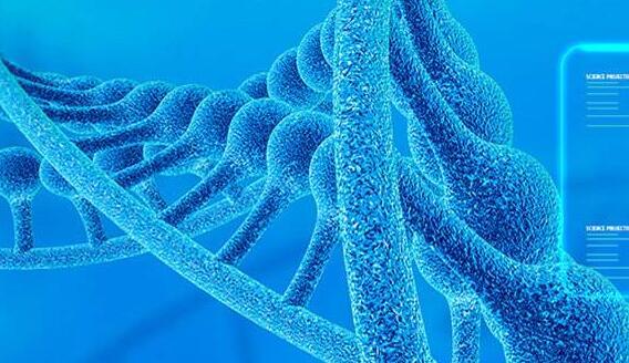 细胞周期检测试剂盒