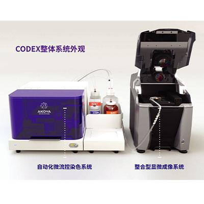 CODEX空间蛋白组荧光成像技术服务
