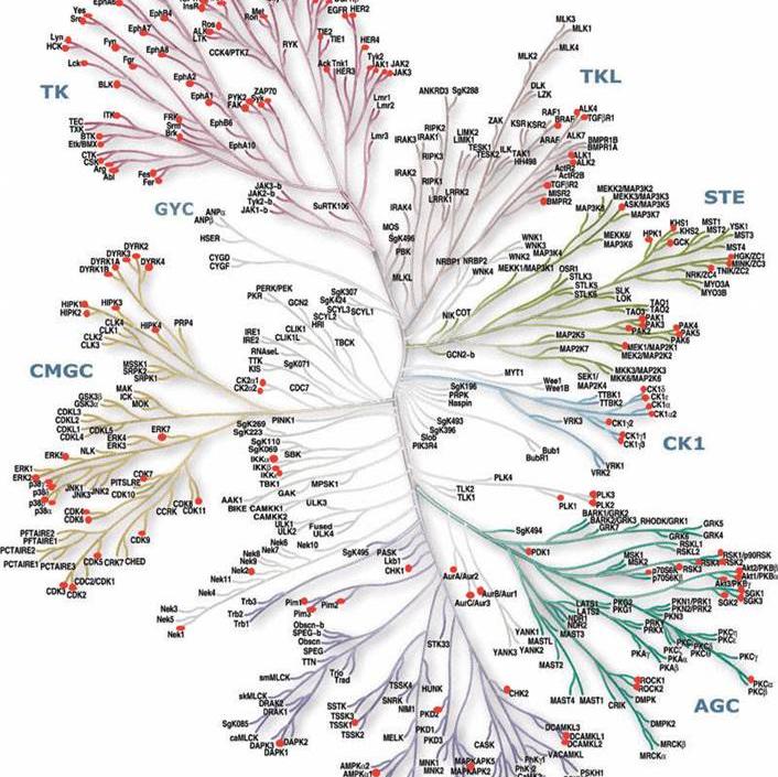激酶谱筛选|激酶筛选|激酶谱