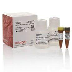 Invitrogen™ No-Stain™ 免染型蛋白标记试剂