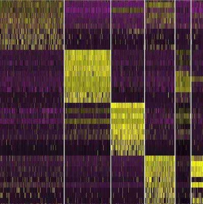 Smart-seq2 单细胞转录组测序服务